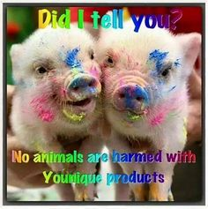 cruetly free pigs